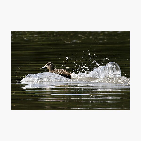 Splashdown!   Photographic Print