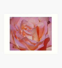 Beautiful Pink Rose Art Print