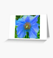 Single Himalayan Blue Poppy  Greeting Card