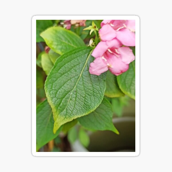 Plant with flower Sticker