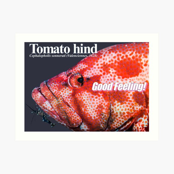 Good Feeling Tomato hind Art Print