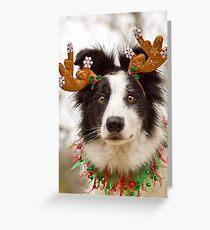 Reindeer Collie Greeting Card