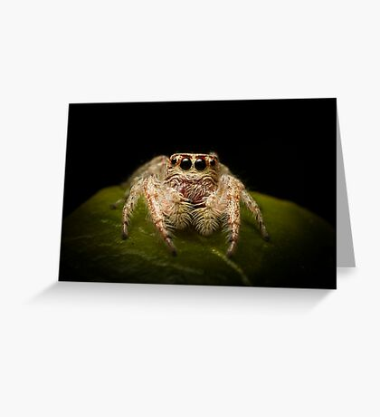 (Servaea vestita) Jumping Spider Greeting Card