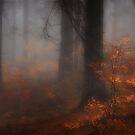 November 2013 (2) by StefaniaC