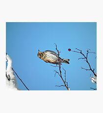 A Song for Winter Photographic Print