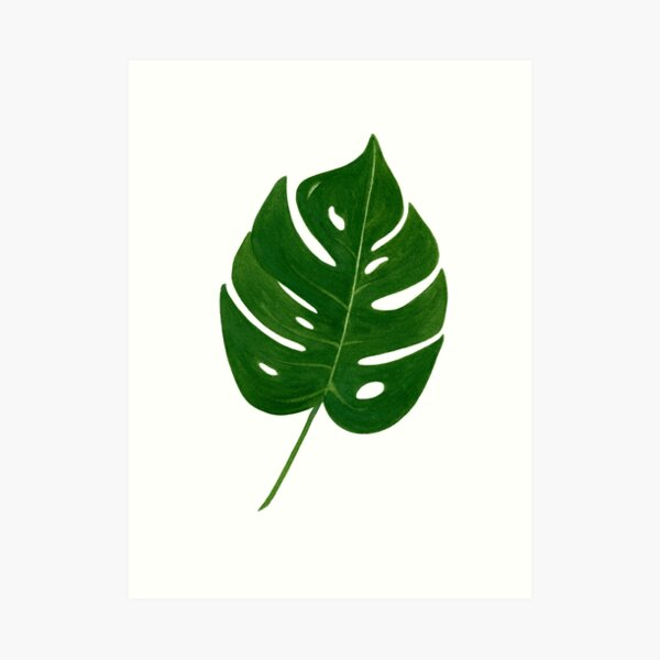 Leaf Print - 2 Art Print