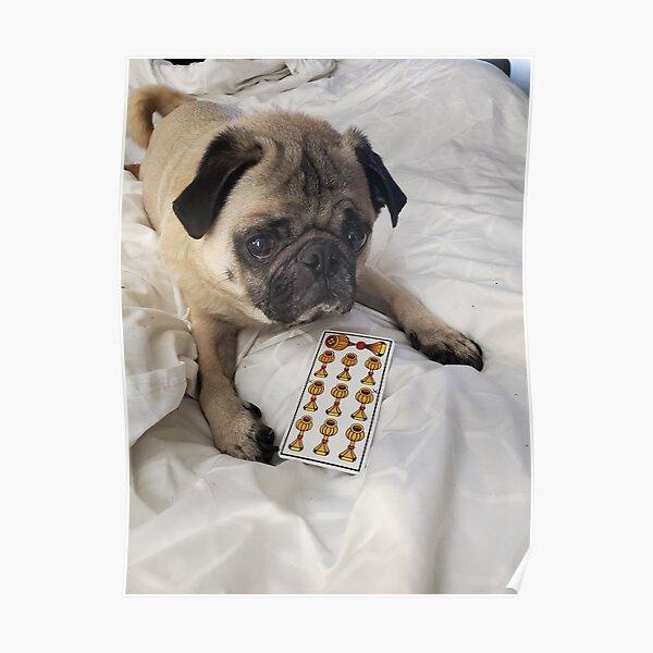Tarot Pug Rocky Poster