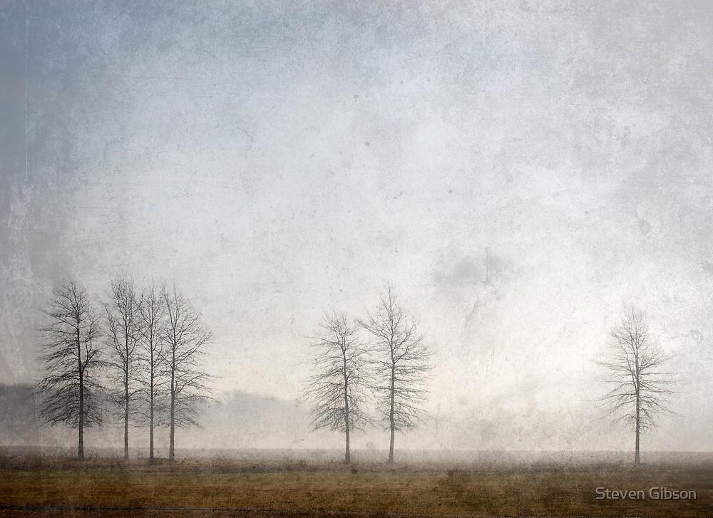 7 Trees by Steven Gibson