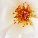 Soft White by Ellesscee