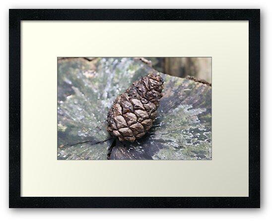 Pine Cone by HilaryAnne