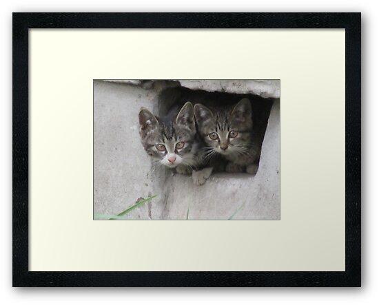 Cute Kittens by HilaryAnne