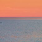 Abstract sunset with two seagulls by marina63