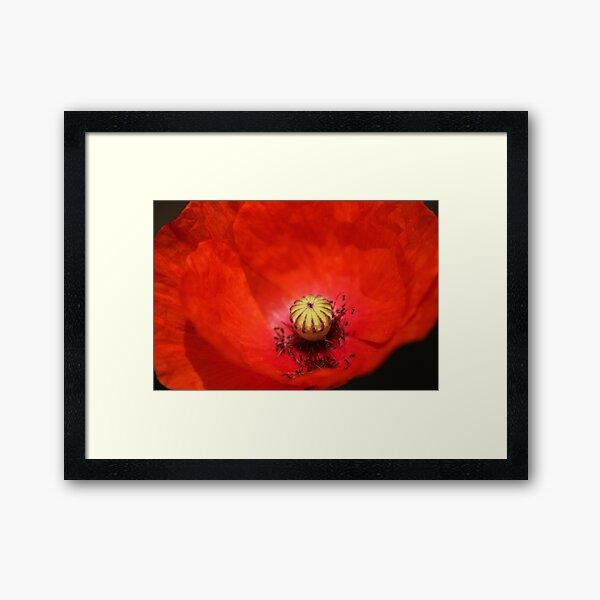 Poppy closeup Framed Art Print