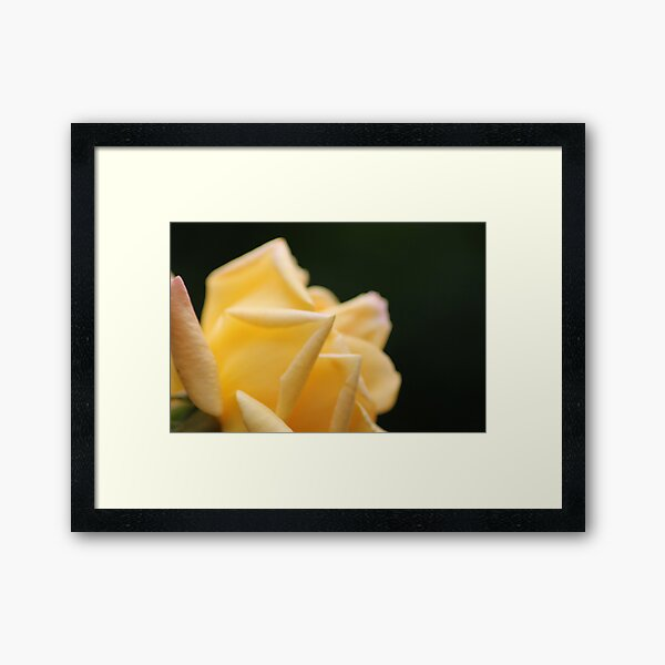 Yellow Rose2 Framed Art Print