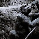 Gorilla by Lisa  Kruchak