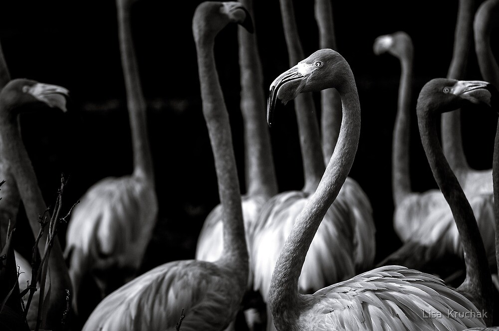 Flamingos  by Lisa  Kruchak