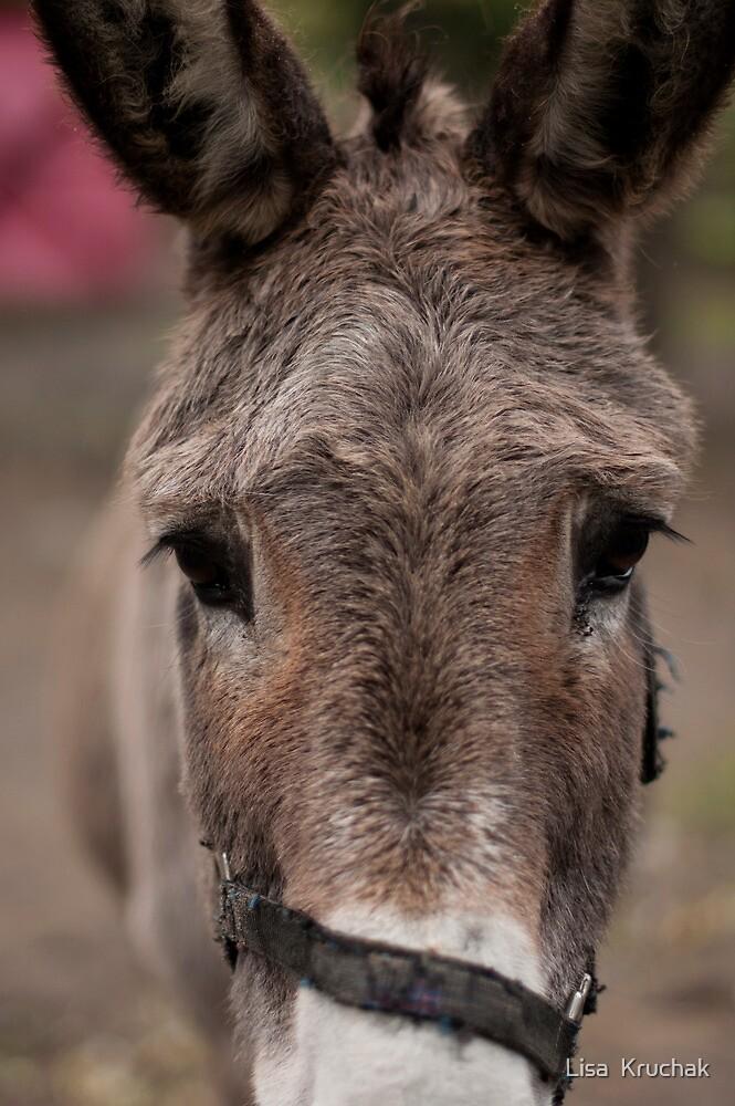 Donkey  by Lisa  Kruchak