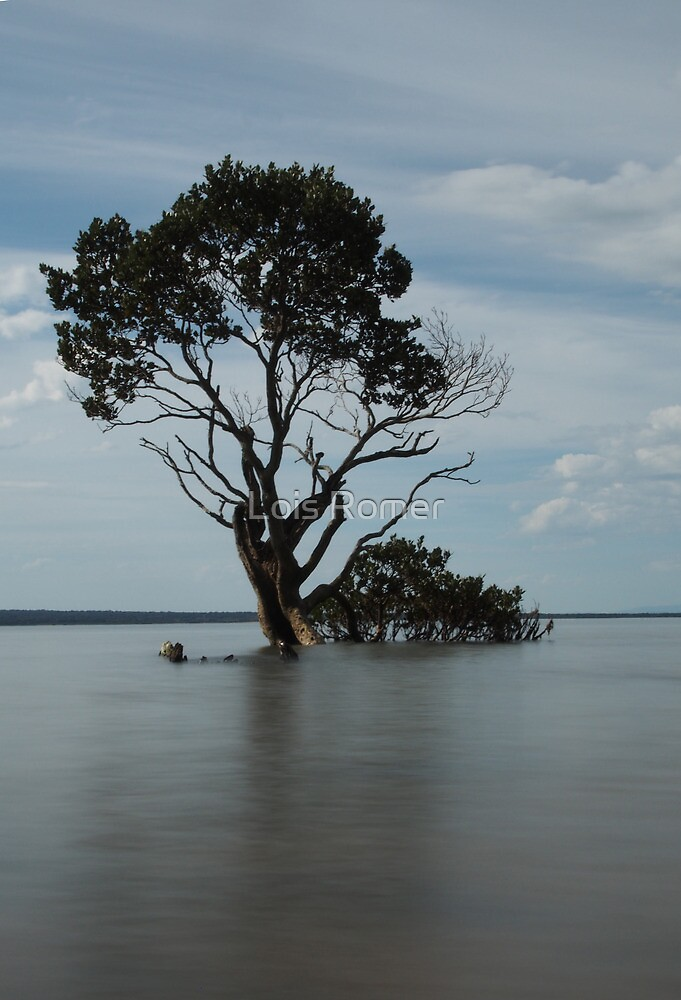 Old man tree by Lois Romer