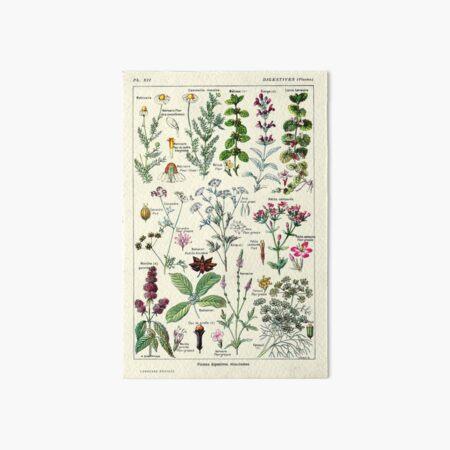 Vintage Digestive Plants Larousse Print Adolphe Millot Art Board Print