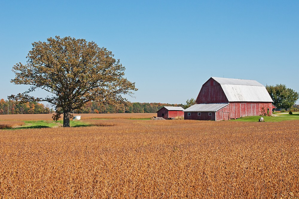 Harvest Time On The Farm by StonePhotos