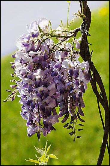 Beauty in Bloom by Nameda