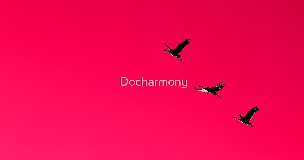 Sandhill Crane Silhouette by Docharmony