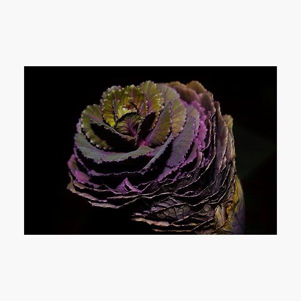 Brassica Photographic Print