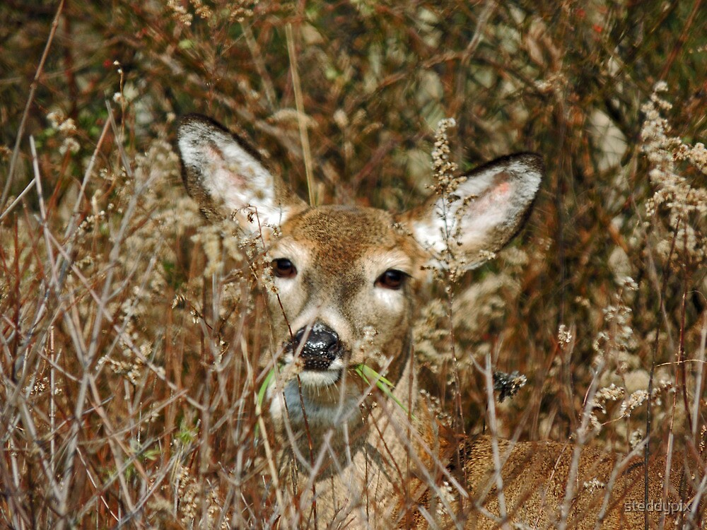 Oh Deer by steddypix