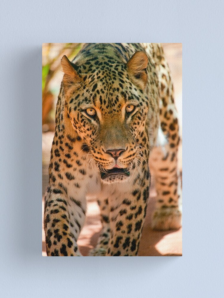 Alternate view of Persian leopard Canvas Print
