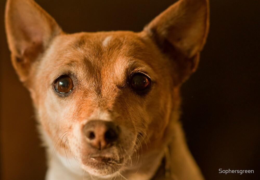 Dog by Sophersgreen