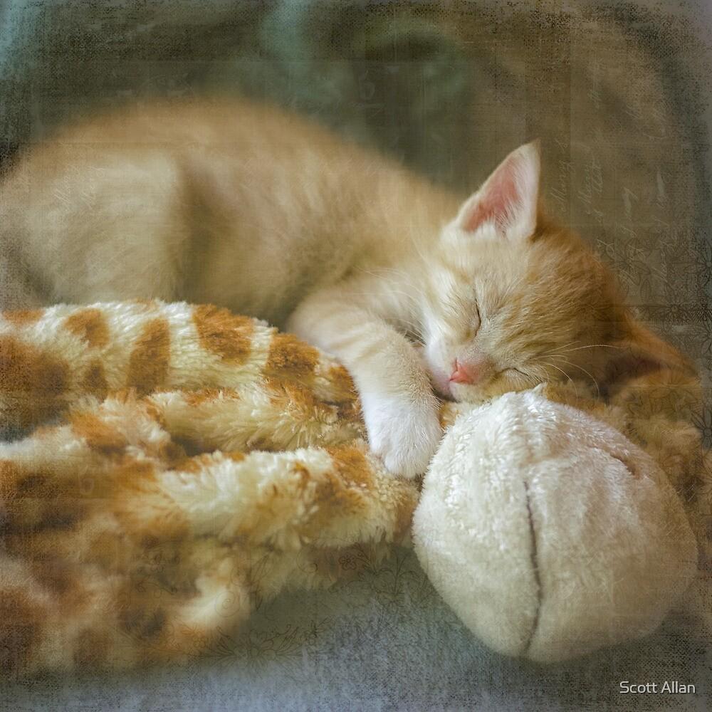 Sweet Dreams by Scott Allan