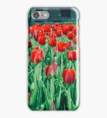 Tulips in Trondheim, Norway iPhone Case/Skin