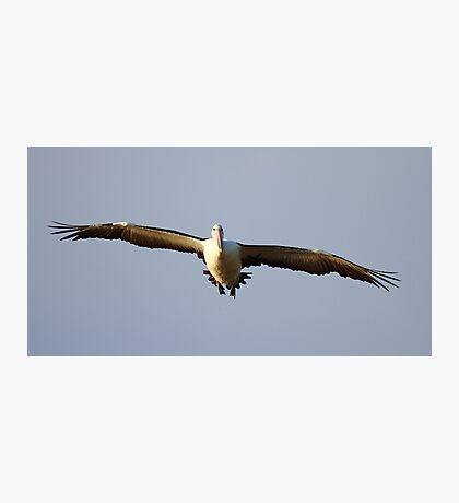 """Pelican Incoming"" Photographic Print"