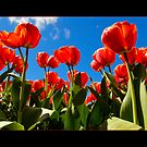 Floriade by vilaro Images