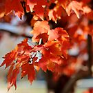 The Tree's Leaves by AbigailJoy