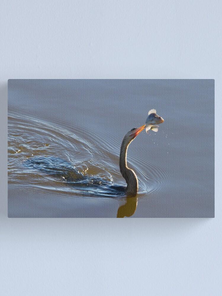 Alternate view of Anhinga with Fish Canvas Print