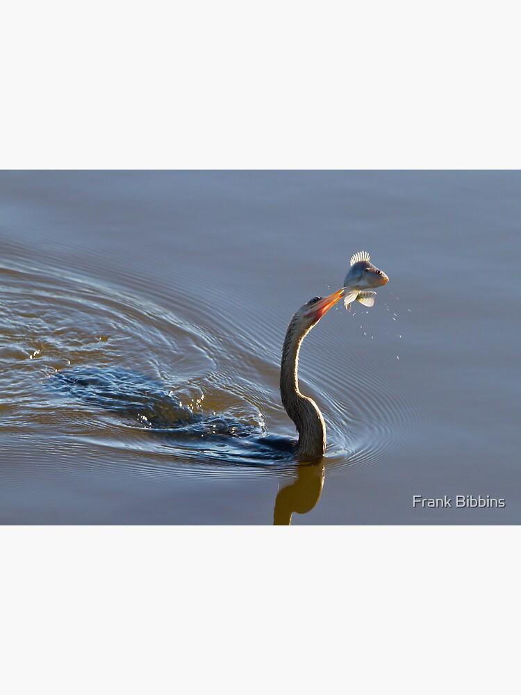 Anhinga with Fish by organicman2