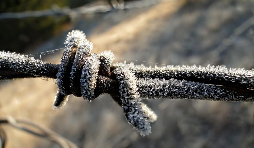 Frosty Barbed Wire by Carolyn  Fletcher