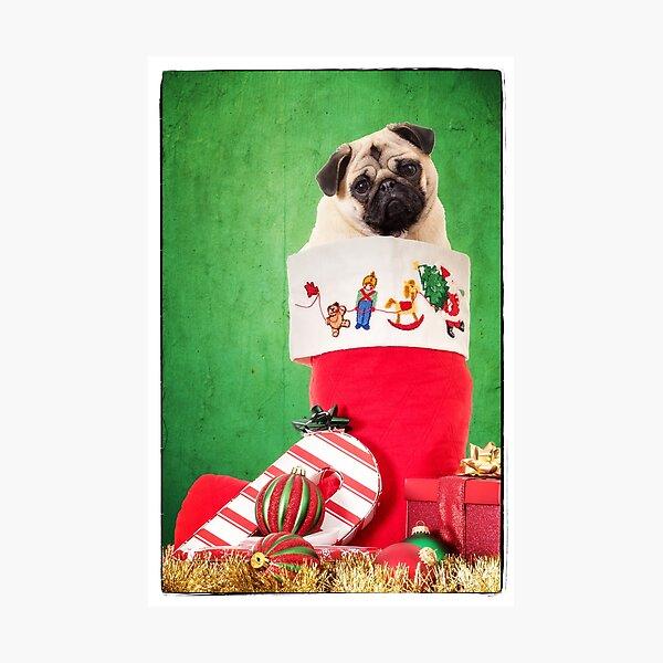 Christmas Stocking Pug Photographic Print