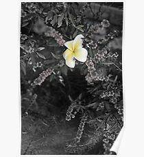 Hawaii Photography Sikspix Inspirational Flower Poster