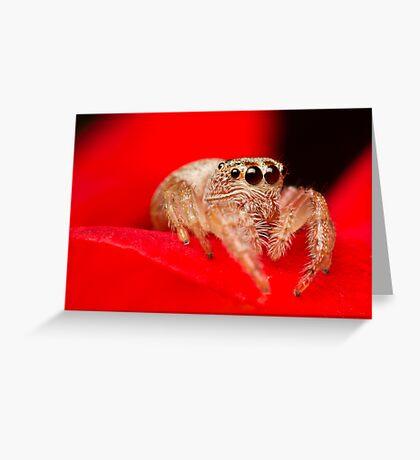 (Servaea vestita) Jumping Spider On Rose Greeting Card