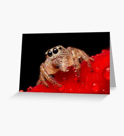(Servaea vestita) Jumping Spider On Rose #2 Greeting Card