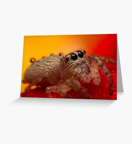 (Servaea vestita) Jumping Spider On Rose #3 Greeting Card