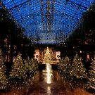 A Longwood Christmas by Eric Tsai
