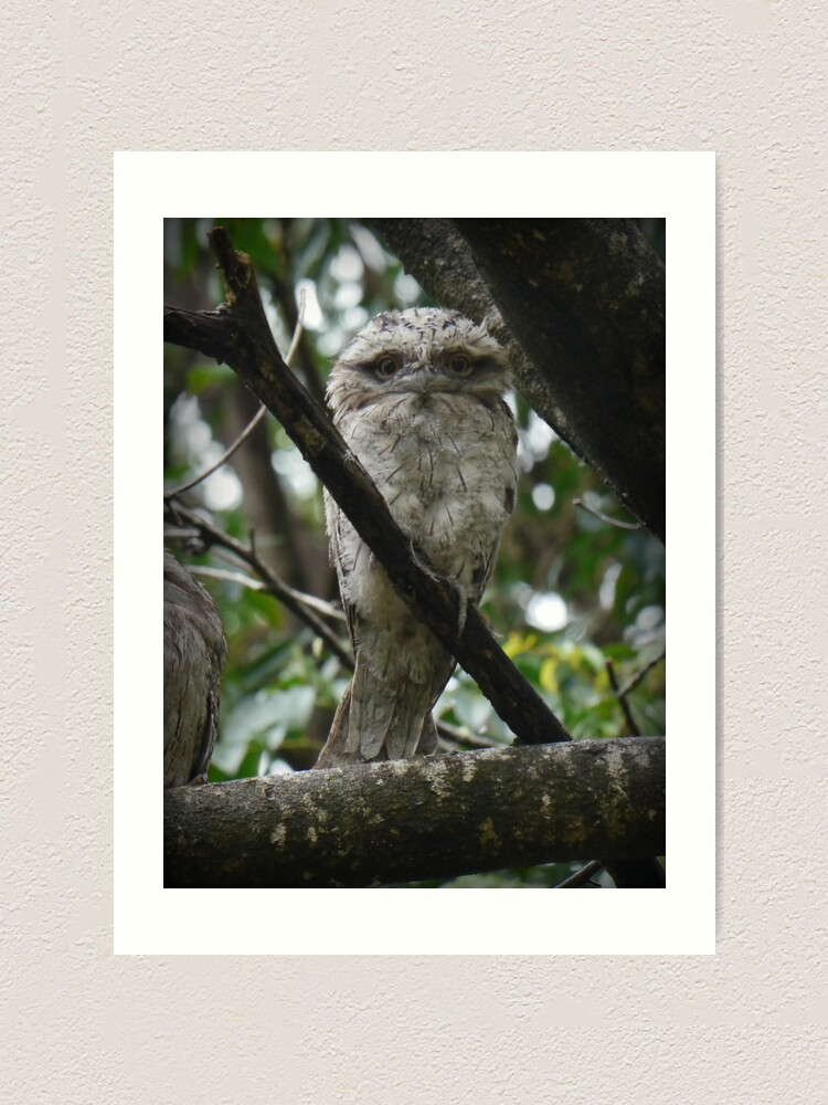 Alternate view of Tawny Frogmouth Chick Art Print