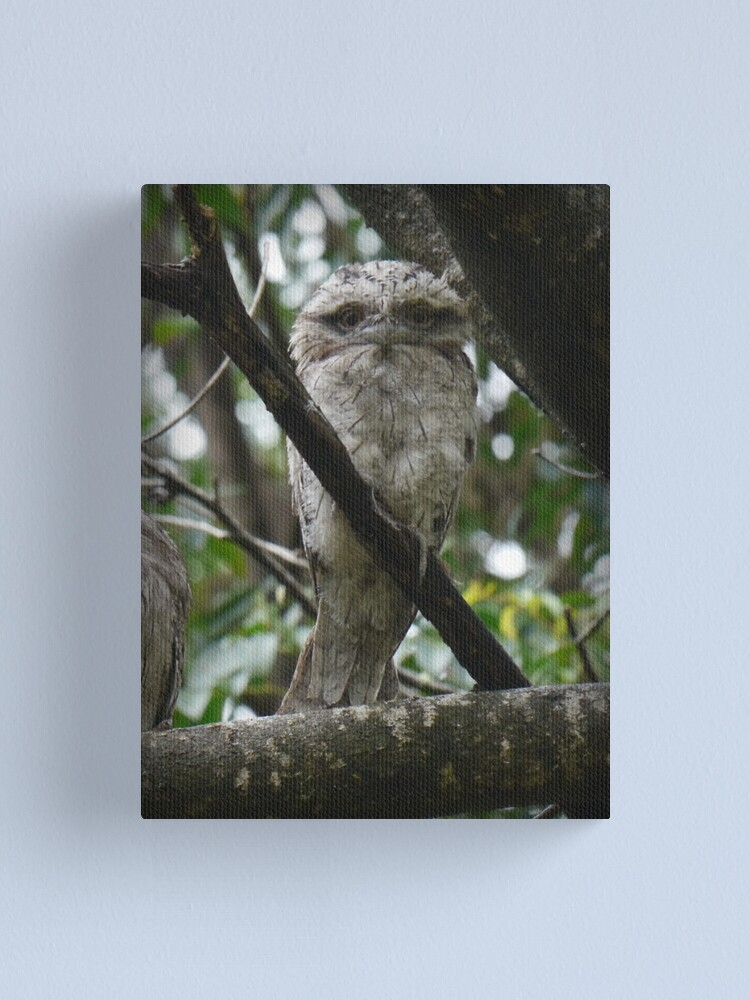 Alternate view of Tawny Frogmouth Chick Canvas Print