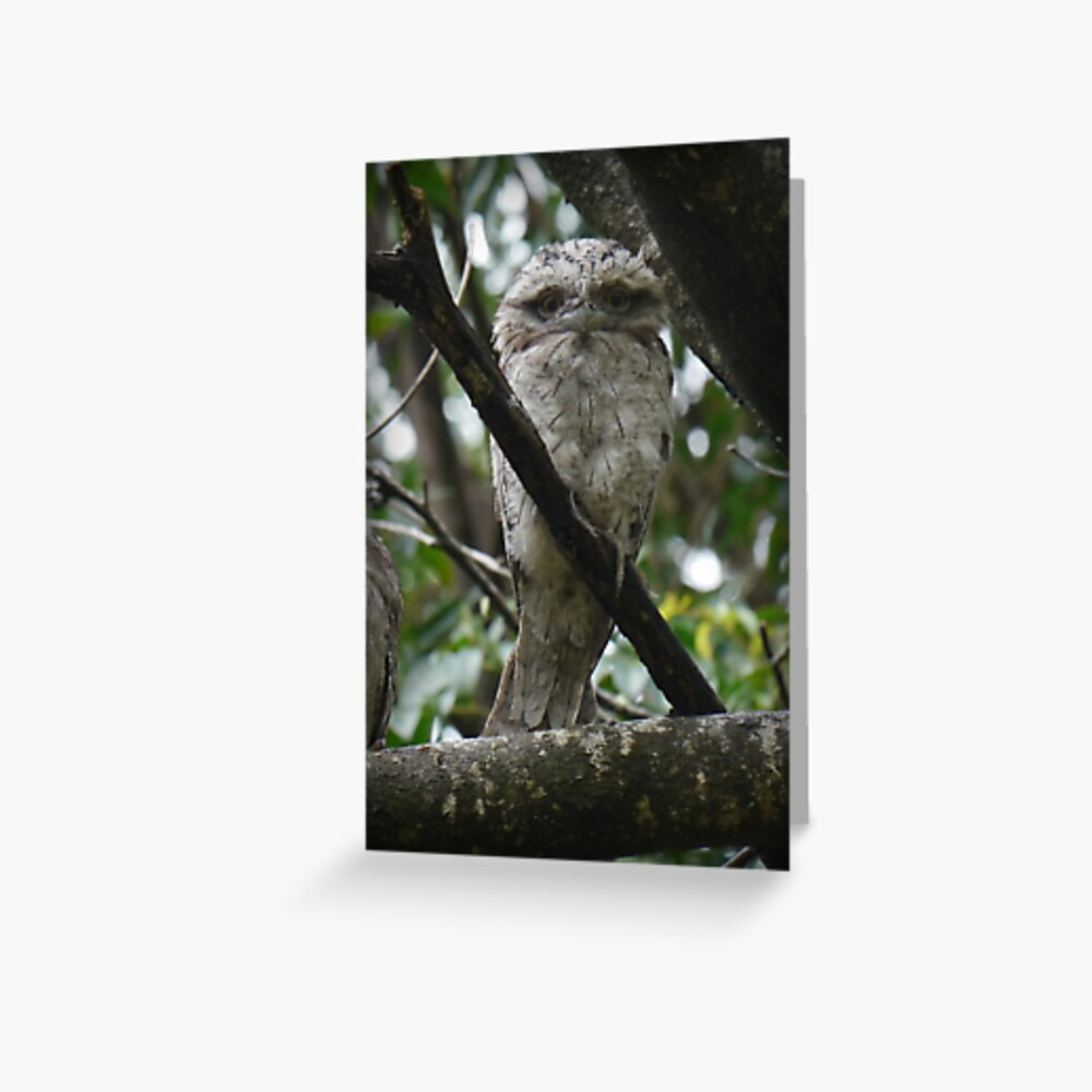 Tawny Frogmouth Chick Greeting Card