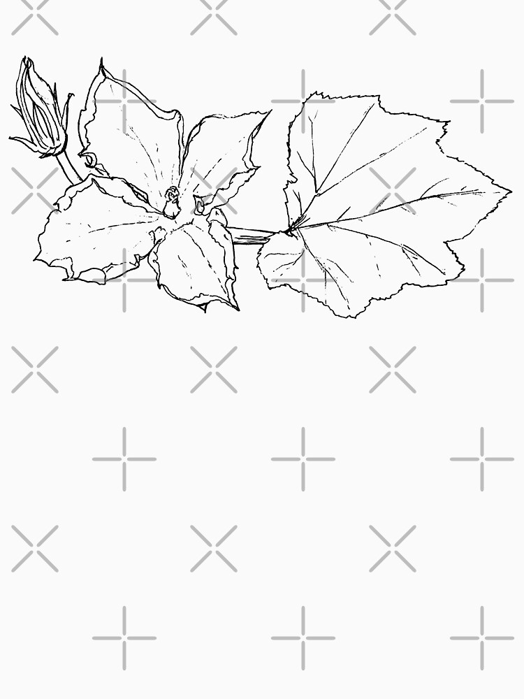 Zucchini Blossom Botanical Drawing by EmilyBickell