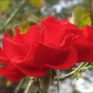 ONE RED ROSE by Colleen2012