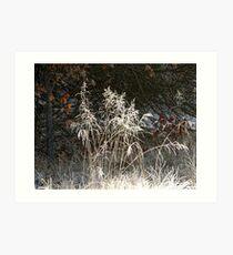 Frosty Foreground Art Print